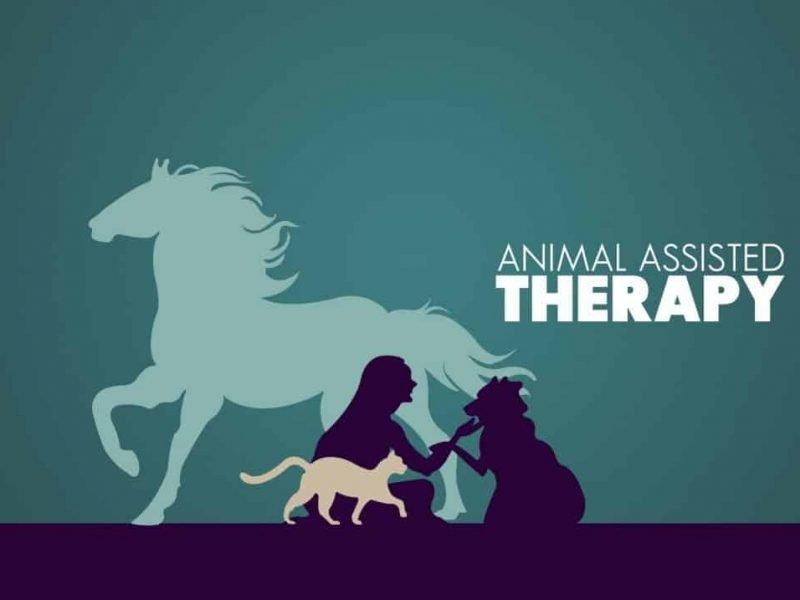 animal-therapy-compressor-1024x717